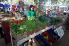 Produção de orgânicos da fazenda da Toca