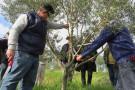 Produtores e técnicos participam de curso sobre poda de oliveiras
